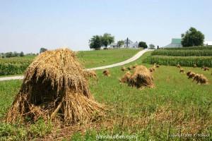 Amish-Farm-Life