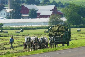 Amish-Farm-Making-Hay