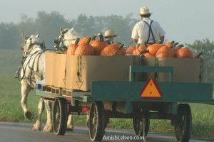 Amish-Horse-Drawn-Wagon