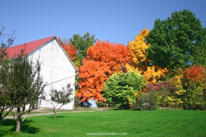 Ohio-Amish-Fall-Foliage