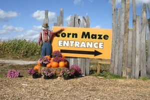 Corn-Maze-at-Sharp-Run-Market-Berlin-Ohio