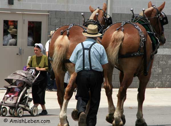 Draft Horses at Horse Progress Days