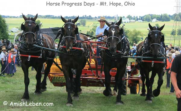 Horse-Progress-Days-Mt.-Hope-Ohio