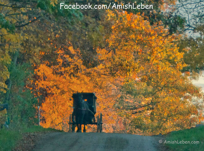 Amish Horse and Buggy in Ohio Amish Country