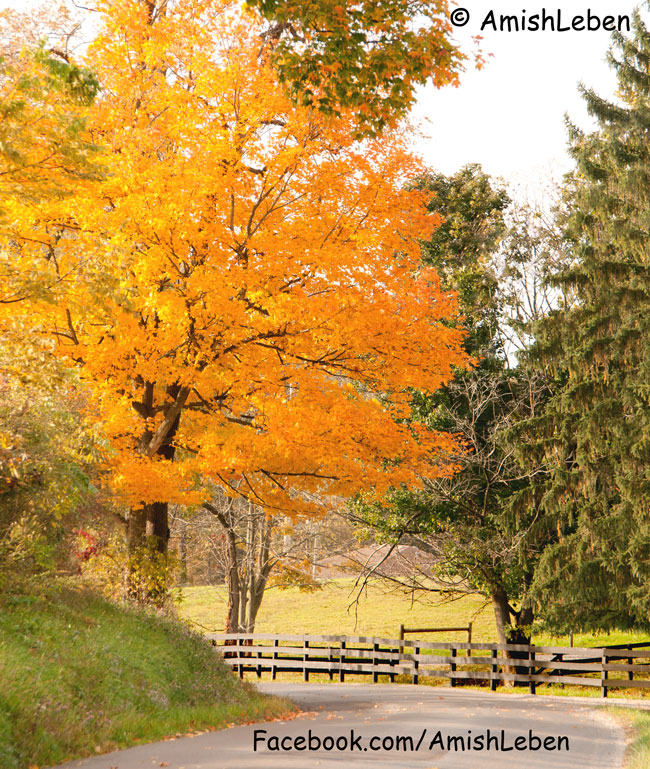 Amish Country Ohio Fall Foliage Voted #3 by National Geographic